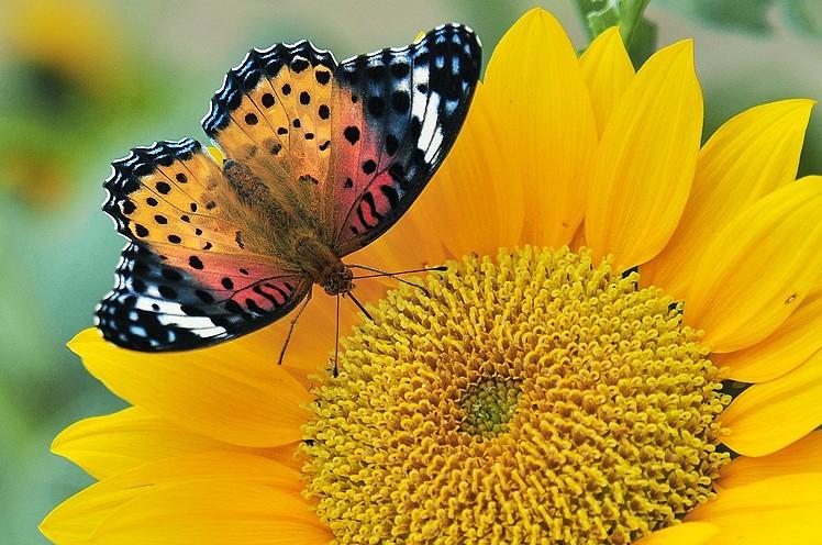 秋天的精灵 昆虫摄影基础知识讲解