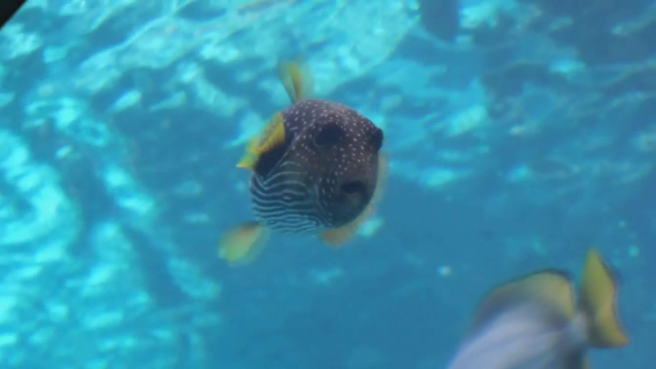 壁纸 海底 海底世界 海洋馆 水族馆 1280_720