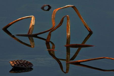 潘鲁生评黄可华的摄影语言:美在意象