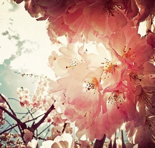 告别毫无新意的拍摄手法大师教你拍花卉