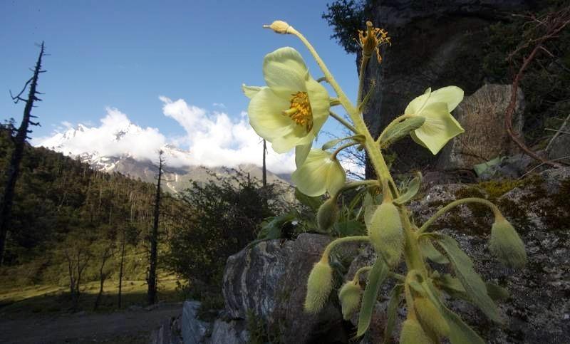 雅鲁藏布大峡谷地区包括了青藏高原已知高等植物种类