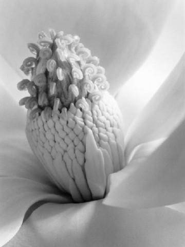 卢骁:赏花的季节