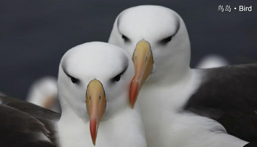 全球著名10大动物岛屿 你是否心动拍摄_旅游摄影-蜂鸟