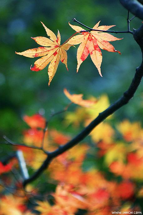 初秋的况味——秋色拍摄的N个层次