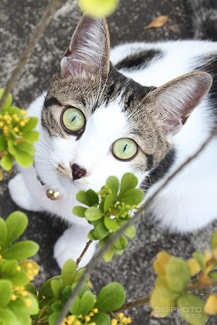 8招教你拍出宠物的自然表情